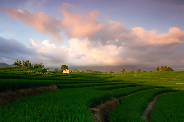 Foto minimalista di risaie con luce che divide i 2 punti di forza