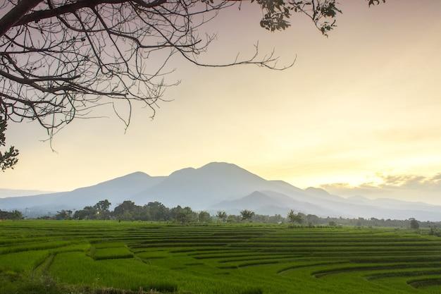 Foto minimaliste di risaie con alberi che incorniciano la mattina