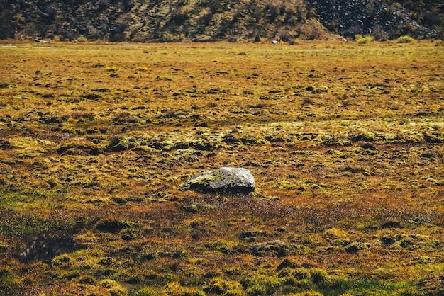 Paesaggio autunnale scenico minimalista con pietra muschiosa tra i muschi sul campo di muschio alla luce solare dorata delle montagne. minimo scenario colorato con radura paludosa dorata illuminata dal sole. minimalismo autunnale in montagna.