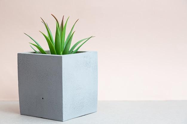 Natura morta minimalista con piante d'appartamento succulente in una pentola di cemento.