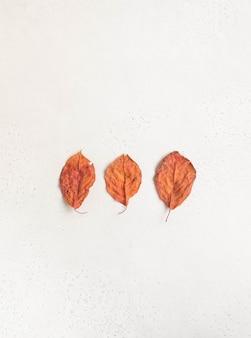 Composizione minimalista di tre foglie autunnali rosse di forma imperfetta su uno sfondo bianco con texture. vista dall'alto. copia spazio