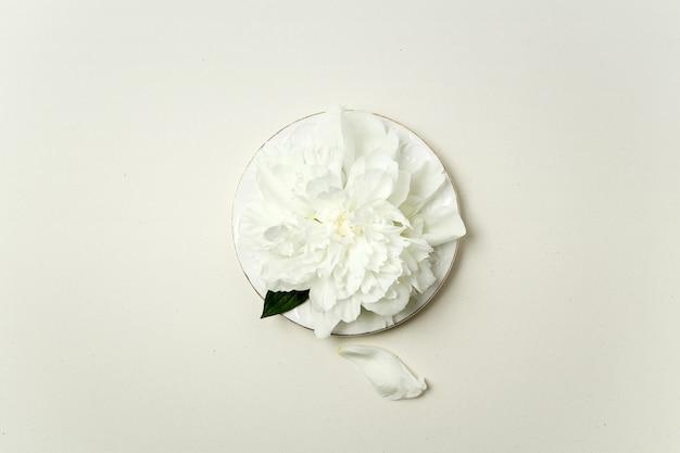 Composizione floreale minimalista. fiore e petali di peonia bianca su un piatto bianco su sfondo pastello, vista dall'alto