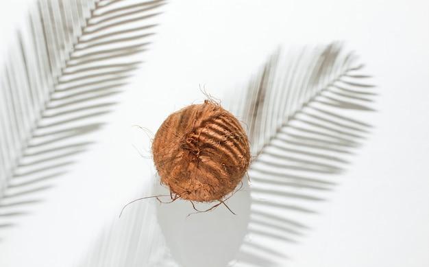 Natura morta tropicale minimalista. noce di cocco con ombre di foglie di palma su sfondo bianco. concetto di moda creativa. vista dall'alto.