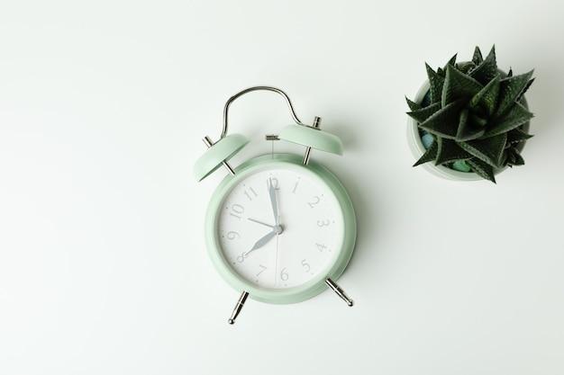 Sveglia alla menta e succulenta su sfondo bianco