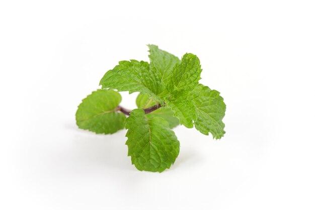 Menta o melissa officinalis ramo foglie verdi isolati su superficie bianca.