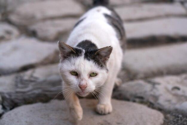 Miserabile gatto randagio in città