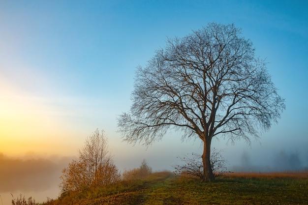 Nebbiosa mattina d'autunno in campagna, un grande albero senza foglie sul campo alba, paesaggio in campagna