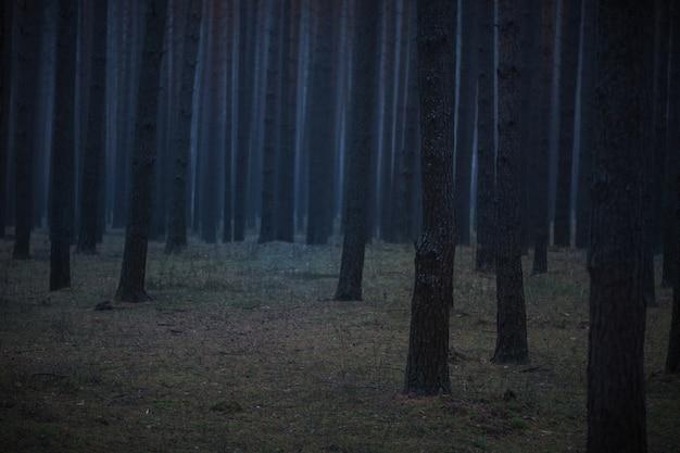 Misty foresta oscura paesaggio