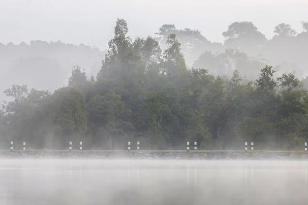 Paesaggio nebbioso con foresta pluviale tropicale asiatica