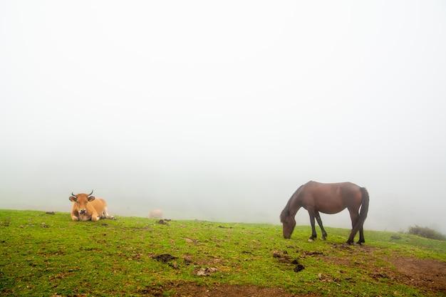 Paesaggio nebbioso con mucche selvatiche e cavalli nell'erba verde di una montagna