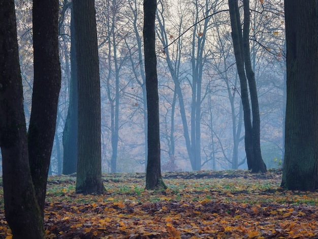 Misty foresta mistica. bellissimo paesaggio nebbioso autunno con alberi in una foresta