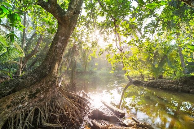 Misty rainforest in costa rica, america centrale