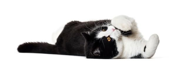 Gatto di razza mista sdraiato sul lato isolato