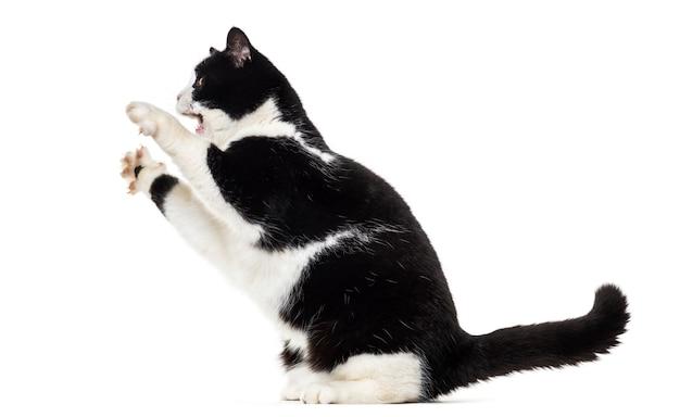 Gatto di razza mista che si eleva isolato