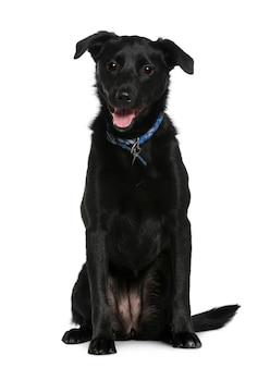 Cane di razza mista, 2 anni, seduto di fronte al muro bianco