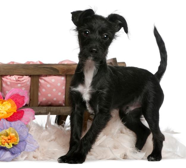 Cane di razza mista, 5 mesi di età, in piedi davanti al letto del cane con fiori