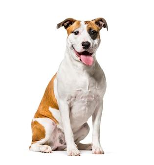 Cane di razza mista seduto di fronte a uno sfondo bianco