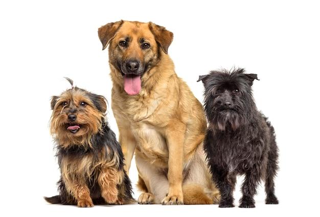 Ansimare cani di razza mista