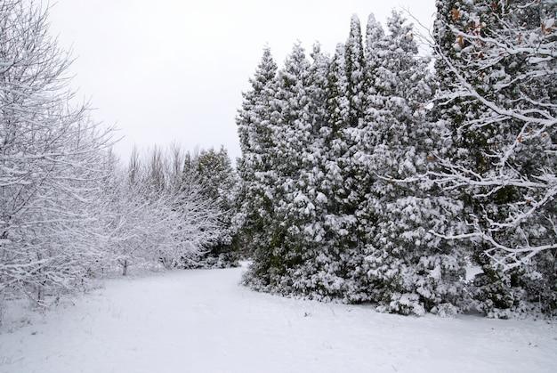 Foresta mista nella neve invernale