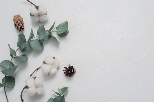 Derida su delle foglie e della pianta di cotone dell'eucalyptus con il posto per testo su fondo bianco