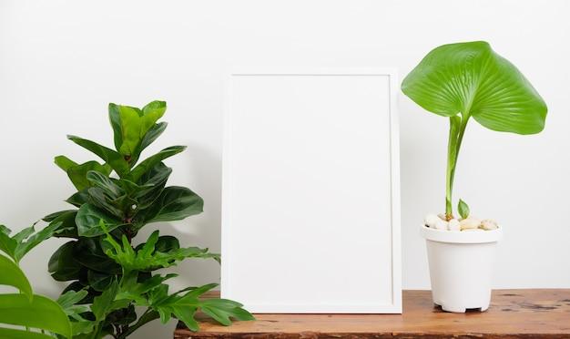 Mock up poster cornice in legno e botanica proiphys amboinensis,pianta di fiddle fig in vaso bianco