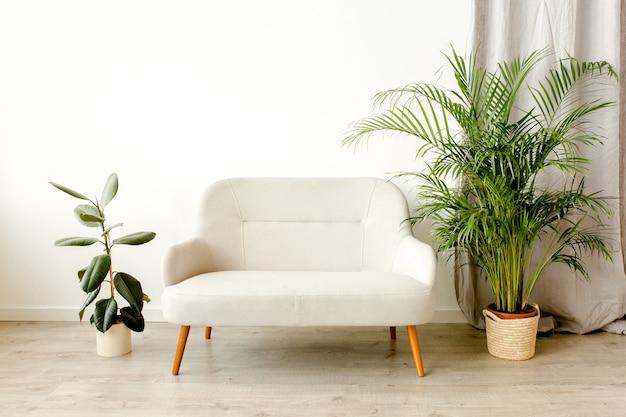 Interni moderni e minimalisti con una pianta di palma tropicale divano in cesto di vimini
