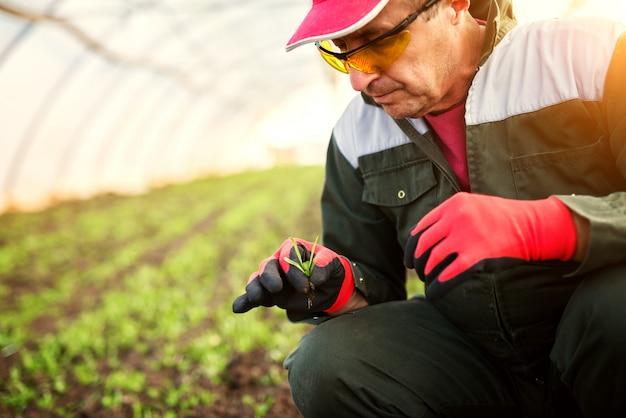 Coltivatore senior moderno in un'uniforme professionale che guarda una plantula nella serra.