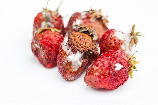 Fragole rosse ammuffite, fragole rosse viziate ricoperte di muffa e marciume