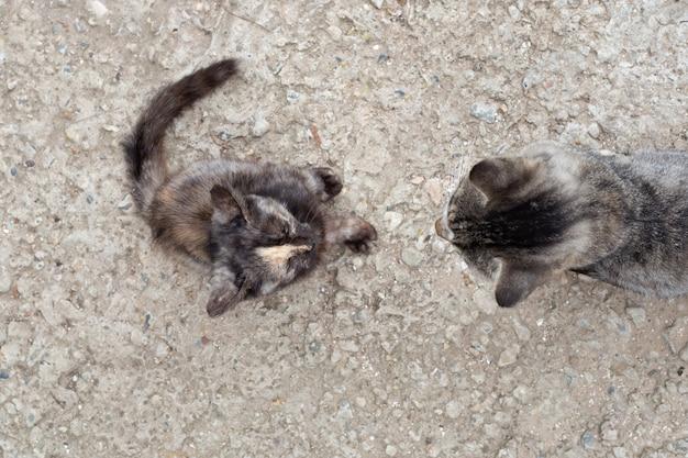 Mamma gatto e gattino siedono uno di fronte all'altro, vista dall'alto. insegnare alle nuove generazioni.