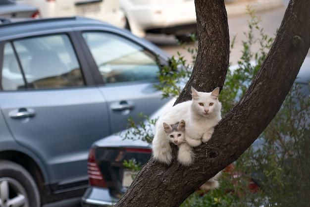Mamma gatta con gattini si siede sul ramo di un albero