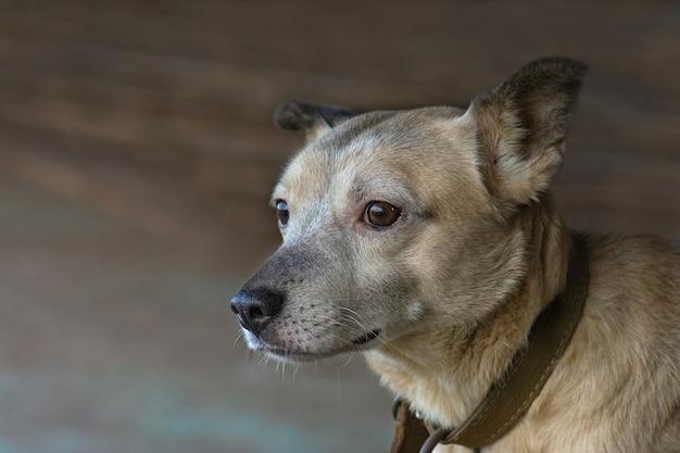 Cane bastardo curioso guardando con occhi enormi