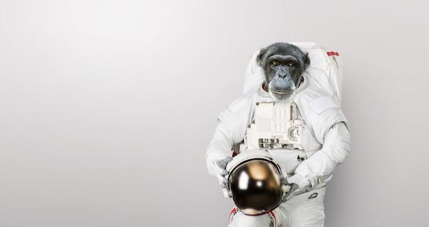 L'astronauta scimmia in una tuta spaziale con un casco si erge su uno sfondo bianco. scimpanzé astronauta, concetto. primato e sviluppo.