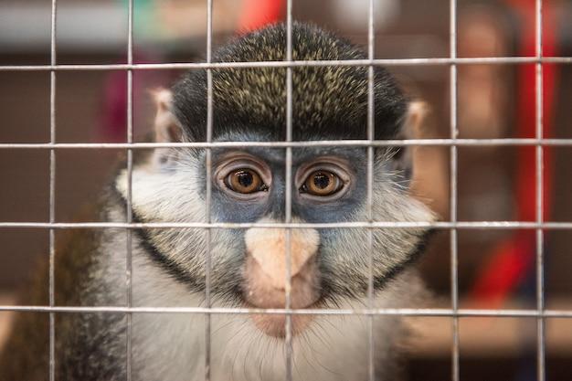 Scimmia nella gabbia
