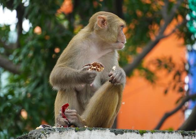 Scimmia che mangia cibo nella foresta
