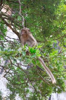 Scimmia macaco ubicazione sulla pietra da vicino