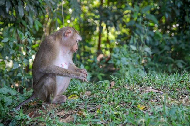 Scimmia sitdown nella foresta laterale