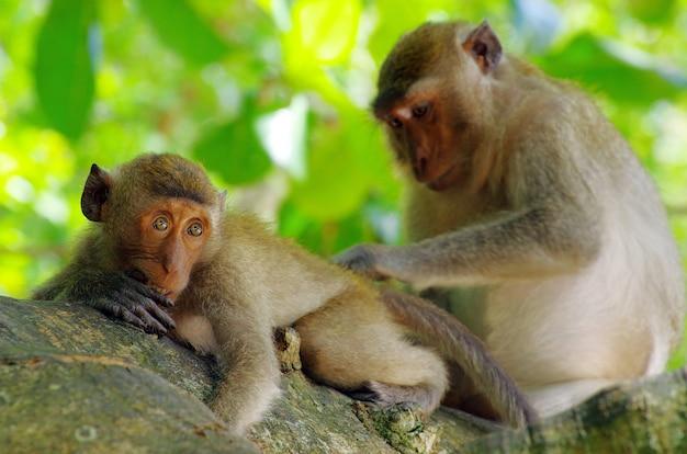 Scimmia seduta sull'albero