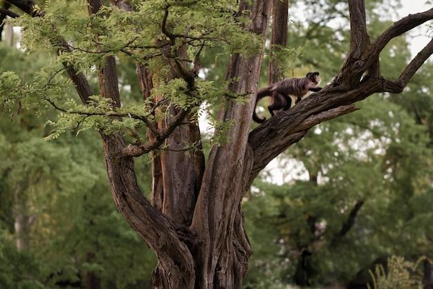 Scimmia sull'albero. scimmia nel suo ambiente naturale.