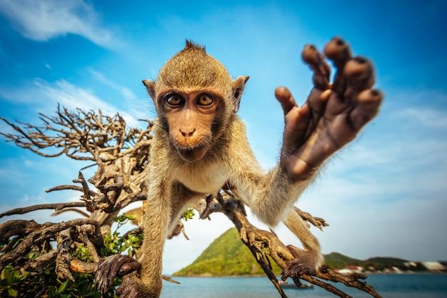 Una scimmia allo stato brado