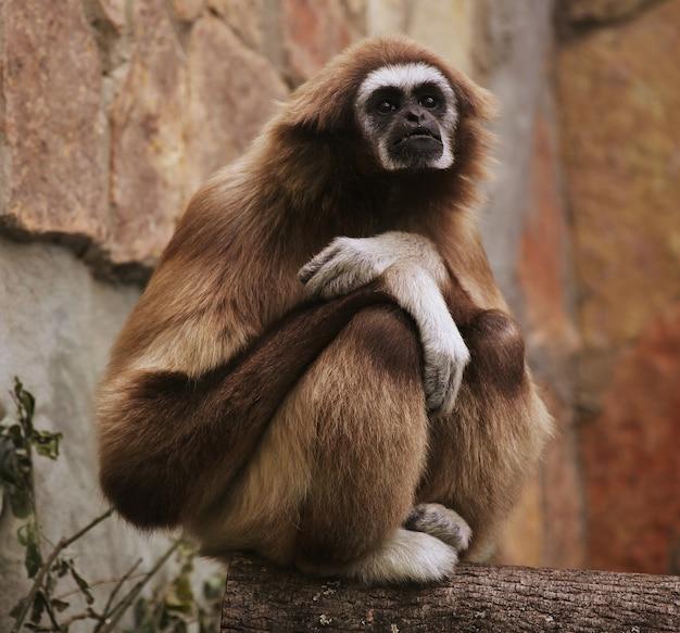 Scimmia nello zoo Foto Premium