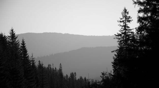 Sfondo monocromatico, vista sulle montagne e strati forestali a diverse altezze. in primo piano un albero di abete rosso. nebbia mattutina.