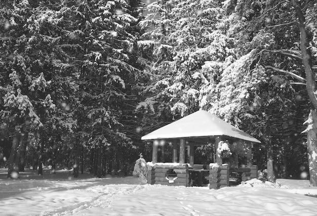 Gazebo in legno monocromatico nella foresta in giornata di sole invernale