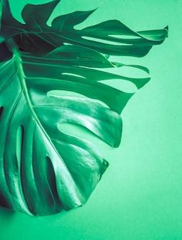 Foglie di mostro su una superficie verde