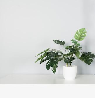 Pianta monstera in vaso con molte foglie