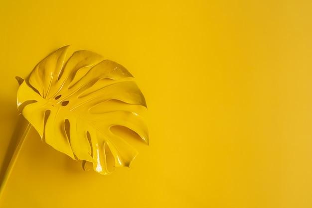 Monstera vista dall'alto modello foglia filodendro isolato su sfondo pastello