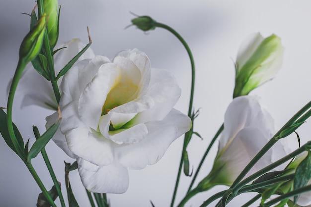 Moody sfondo floreale con fiori bianchi eustoma o lisianthus su sfondo blu con copia spazio, disegno floreale, messa a fuoco selezionata.