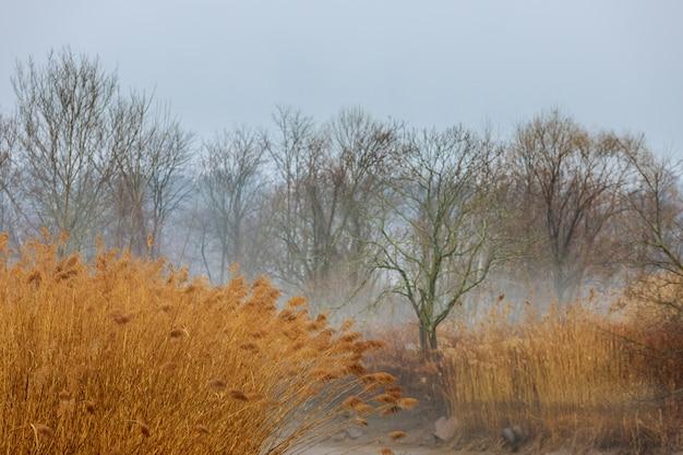 Fondo stagionale grigio lunatico - alberi in nebbia, giorno nebbioso piovoso, gocce di pioggia