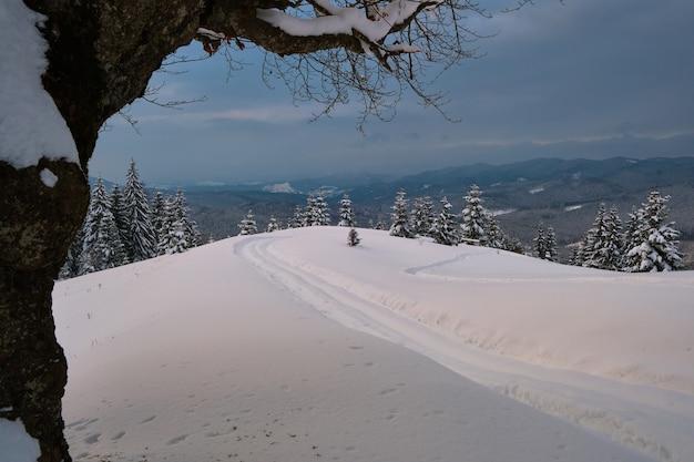 Paesaggio lunatico con sentieri e alberi scuri spogli coperti di neve fresca caduta nella foresta di montagna invernale in una fredda sera cupa.
