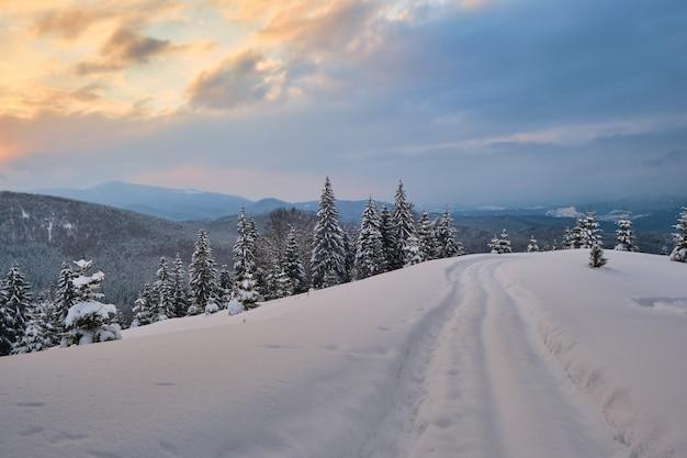 Paesaggio lunatico con sentieri e alberi spogli scuri ricoperti di neve fresca caduta nella foresta di montagna invernale in una fredda mattina nebbiosa.