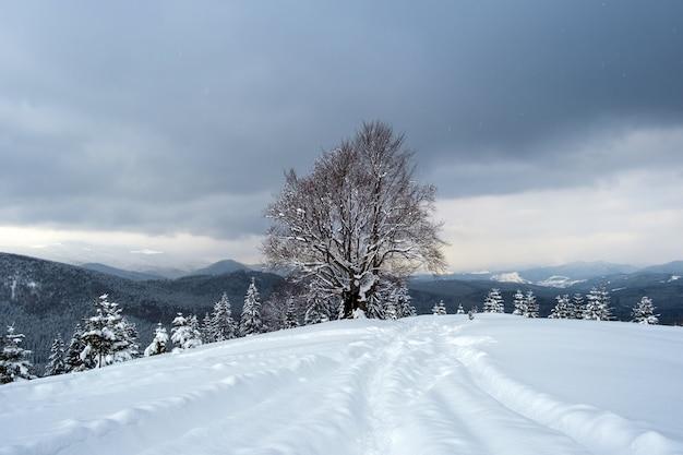 Paesaggio lunatico con sentieri e alberi scuri ricoperti di neve fresca caduta nella foresta di montagna invernale in una fredda giornata uggiosa.